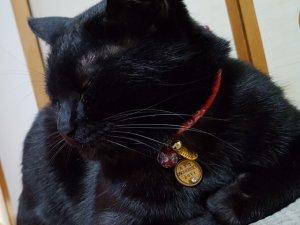 画像4: 猫に小判★開運厄除/交通安全